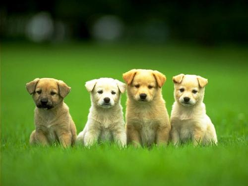 Orange County Humane Society - Pet Adoption in Huntington