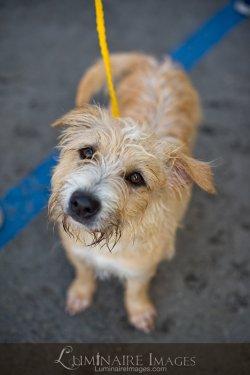 Orange county humane society pet adoption in huntington - Garden grove dog and cat hospital ...